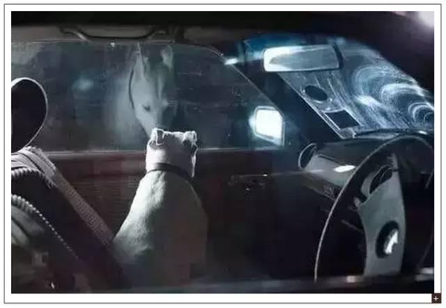 Image result for 为什么,有些人开车到家后会独自坐在车中发呆?