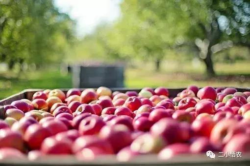 做水果生意,這5個模式和4個趨勢一定要了解!