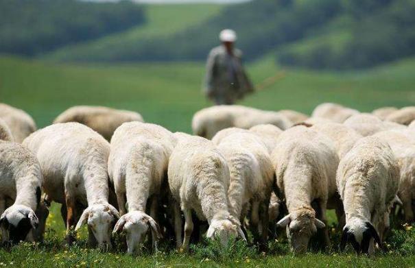 """做管理,要學會""""放羊""""! (深度好文)"""
