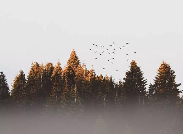 三個故事告訴你,活得簡單,才能活得自由