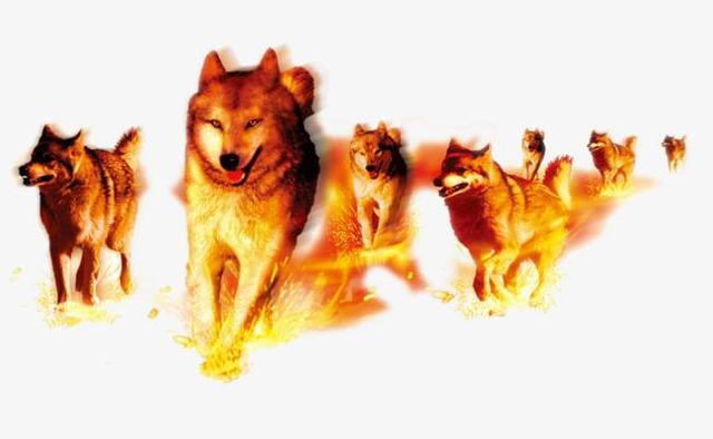 狼性思維! 男人保持這五種狼性,必成大事!