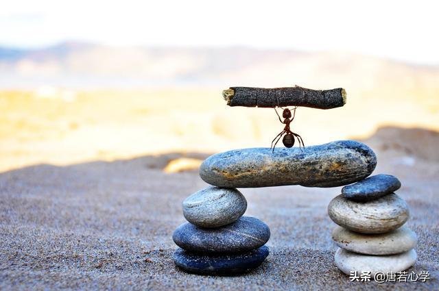 懶螞蟻效應:決定你能走多遠的,不是你的勤奮,而是這個特質