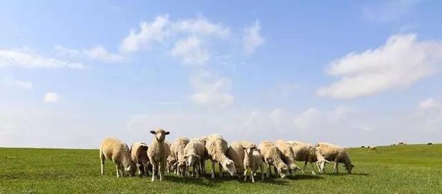 砍柴的陪不住放羊的,請放棄你的無效社交! (深度好文)
