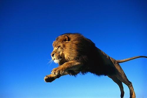 洛克菲勒:機會出現時,就該像獅子一樣撲向它,不拖延不猶豫
