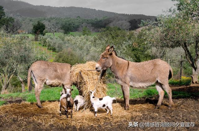 農夫與三個小偷的故事,暴露了人生三大陷阱:大意、輕信、貪婪